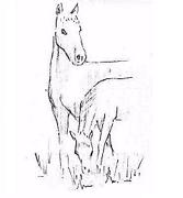 Paarden-KI Service